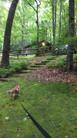 Ash Grove Mountain Cabins & Camping: Teddy walking with Dogwood Den in the background