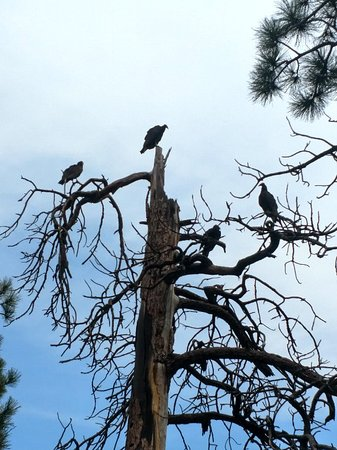 Sugarite Canyon State Park照片