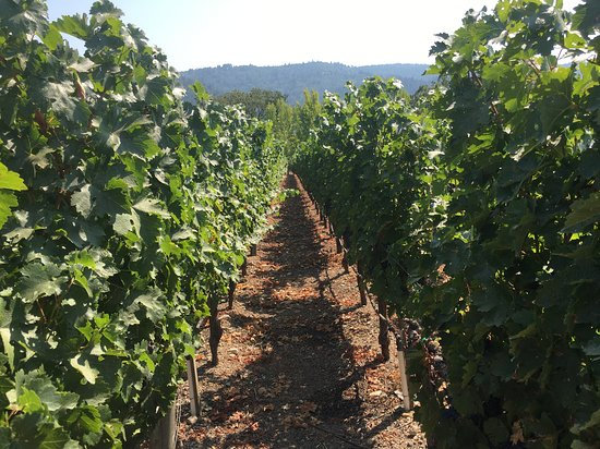 Clos Pegase Winery Image