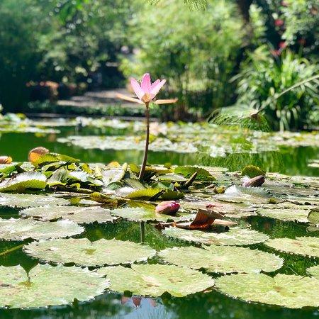 Botanical gardens jardin botanico puerto de la cruz 2018 alles wat u moet weten voordat je - Botanical garden puerto de la cruz ...