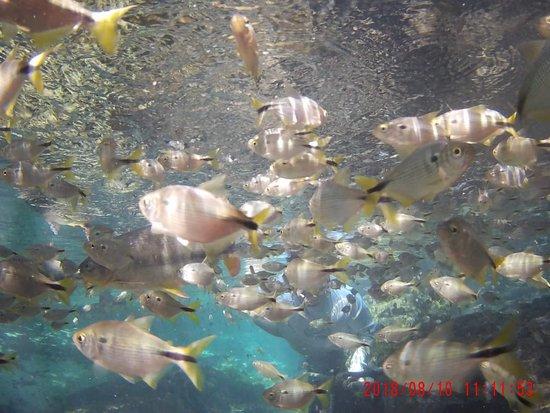 Flutuacao Vale das Aguas
