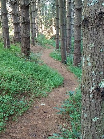 Laurel Springs, Северная Каролина: Beautilly laid out trail down to the New River. It's so quiet in there!
