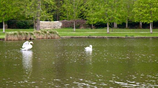 Dampierre-en-Yvelines, Francia: Swans on water in front of folly