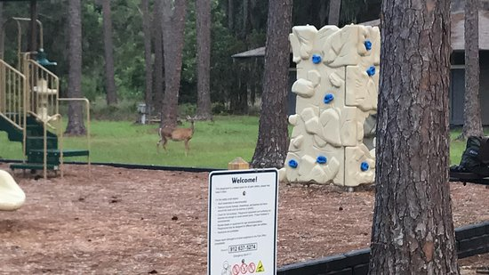 Fargo, GA: Playground with deer in background