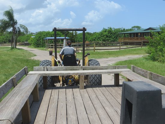 Obloy Family Ranch: the wagon ride to see the animals