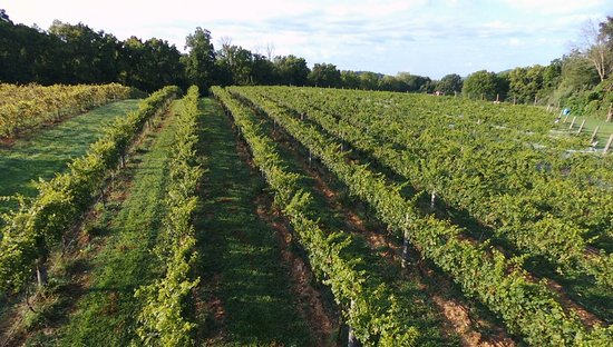 Winchester, Virginie : Our vineyard by drone
