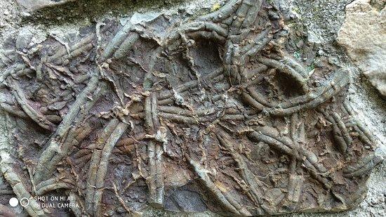 Ruta de las Huellas Fosiles