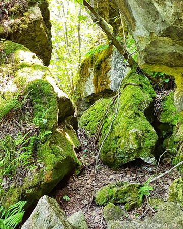 Bruce Peninsula, Canada: Greig's Caves - moss covered rock_large.jpg