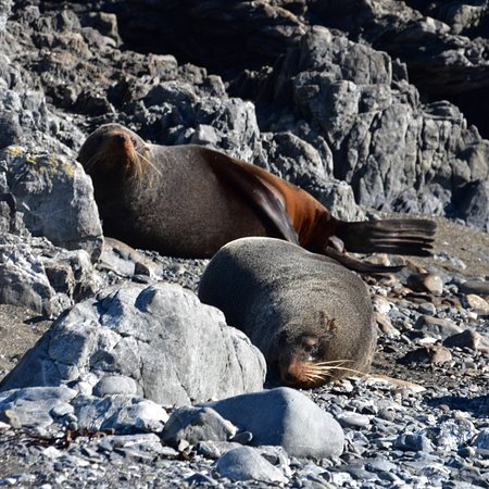 Seal Coast Safari : photo3.jpg
