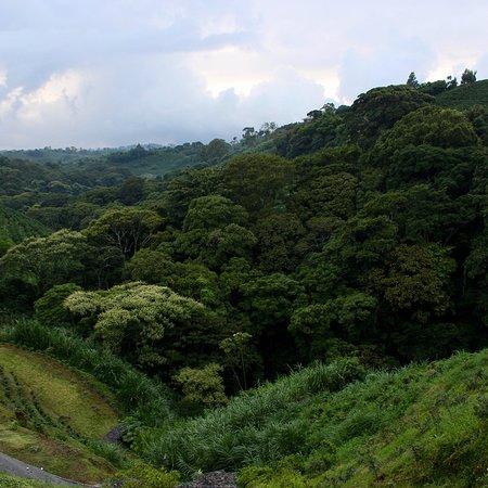 Province of Alajuela, Kosta Rika: photo3.jpg