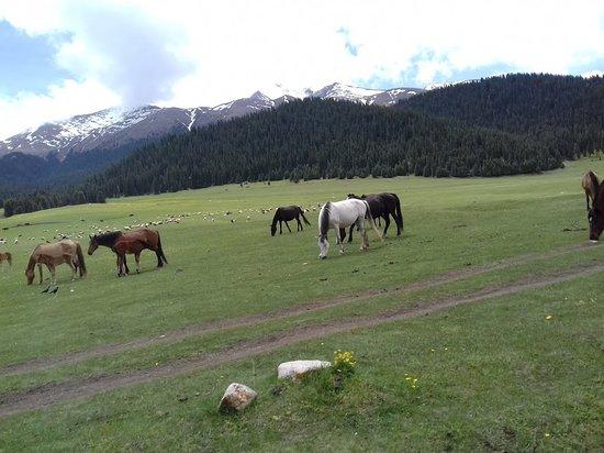 Григорьевка, Киргизия: wąwóz