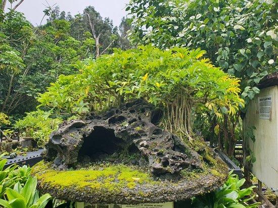 Kurtistown, Χαβάη: 20180815_120824_large.jpg