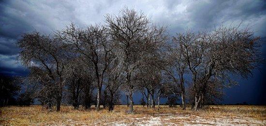 Nxai Pan National Park, Botswana: Nxai Pans