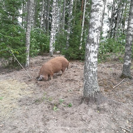 Мантта-Вилппула, Финляндия: IMG_20180813_170755_large.jpg