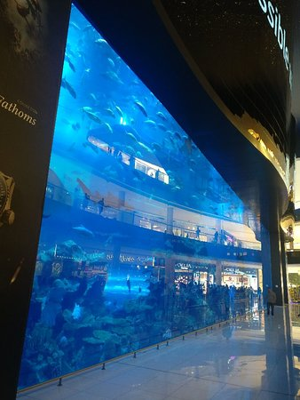 The Dubai Mall: IMG_20180812_151112_large.jpg