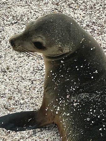 Wreck Bay Diving Center: Sea Lion on Espanola