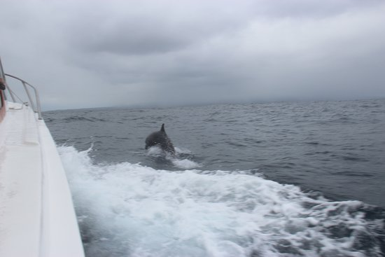 Wreck Bay Diving Center: Dolphins on the way back to San Cristobal
