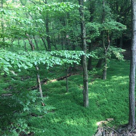 Clay Pit Ponds State Park Preserve: photo2.jpg