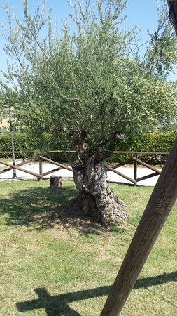 Ortezzano, Italia: 20180813_144104_large.jpg