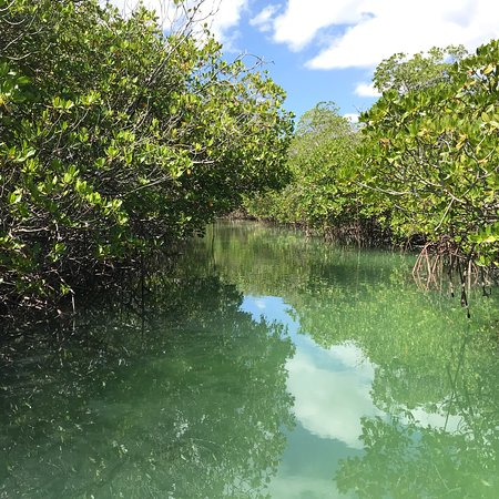 Paradise Island & The Mangroves (Cayo Arena): photo0.jpg