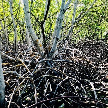 Paradise Island & The Mangroves (Cayo Arena): photo7.jpg