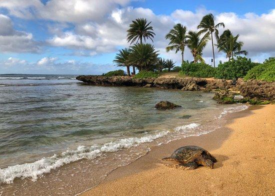 Blue Hawaii Photo Tours
