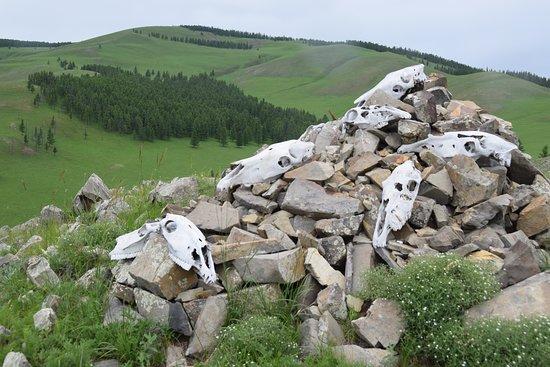 Arkhangai Province, Mongolia: Even rusten tussen de paarden schedels
