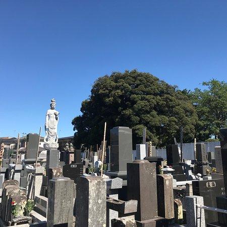 Joju-in: 入り口の山門から入ると、正面の本堂には大日如来がご本尊。 本堂脇には七福神、墓地の中央にはしあわせ観音が境内を見守っている。 墓地を歩くと、見川喜蔵墓及び見川家五輪塔(市指定有形文化財)、元禄