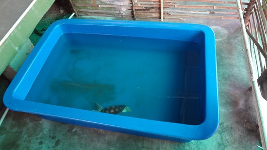 Sea turtle trapped in a small plastic container