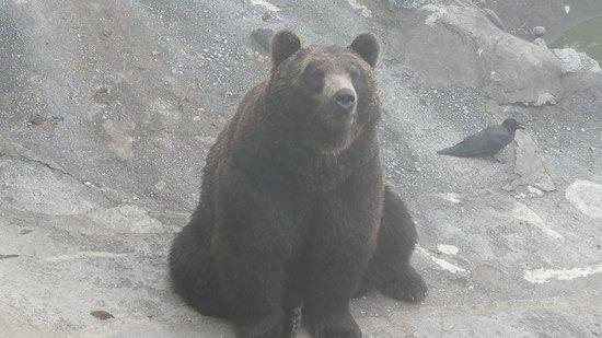 Noboribetsu Bear Park: クマ!