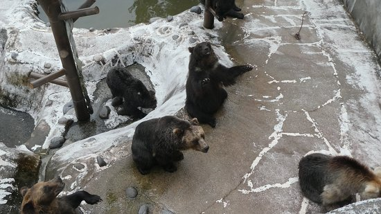 Noboribetsu Bear Park: エサをくれ!