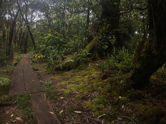 Alakai Swamp Trail : My favorite part of the trail was the solitude and the boardwalks.