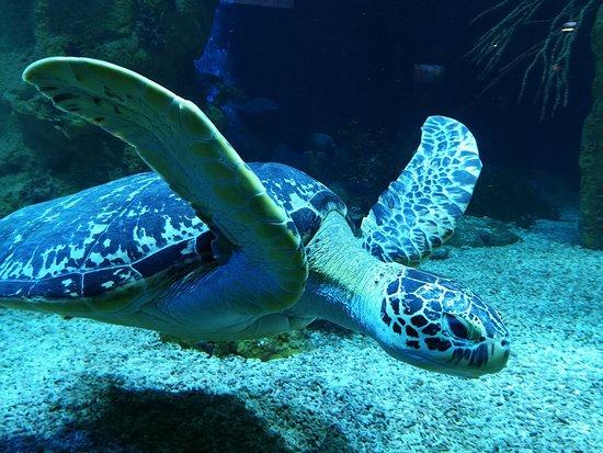 Haus des Meeres - Aqua Terra Zoo: Majestätische Schildkröte