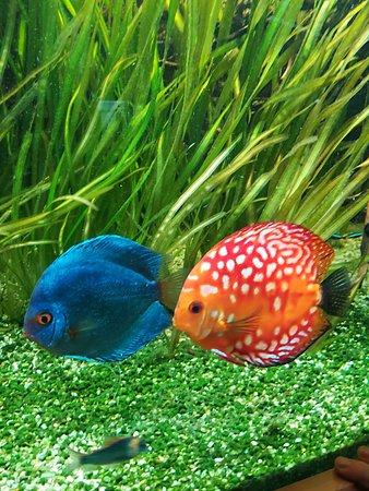 Haus des Meeres - Aqua Terra Zoo: 2 Schönheiten im Haus des Meeres