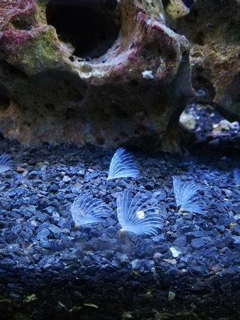 Haus des Meeres - Aqua Terra Zoo: Haus des Meeres
