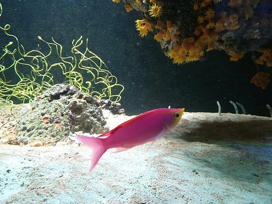 Haus des Meeres - Aqua Terra Zoo: Hübsche Lady in Pink