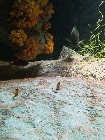 Haus des Meeres - Aqua Terra Zoo: Guck, guck...;)