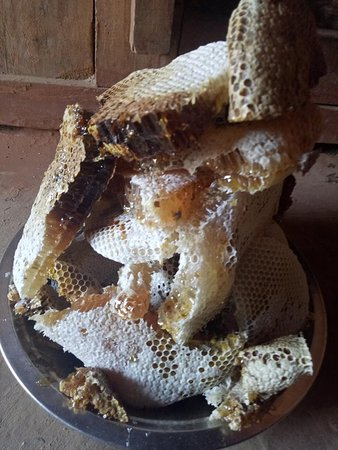 Bagmati Zone, Nepal: Honeycomb from our bees!