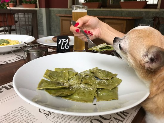 Bognanco, Italie: pasta and doggy