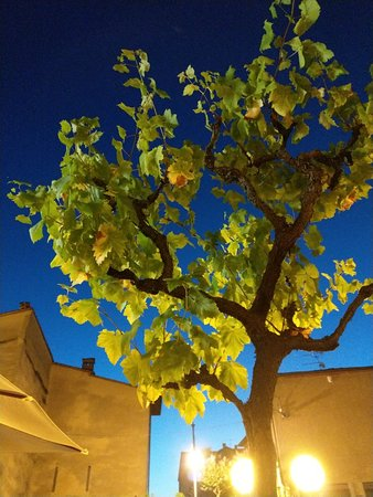 Soci, Italien: IMAG0191_large.jpg