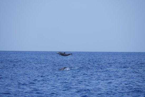 Captain Toch: Prise en mode rafale lors de sauts de dauphins