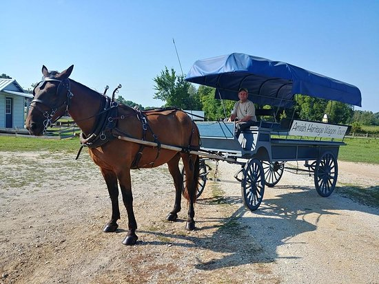 Ethridge, Теннесси: Our wagons are in excellent condition, and our local guides give the best wagon tours in Ethridg