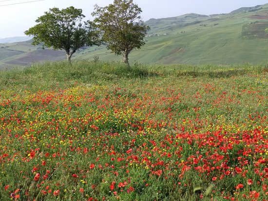 Castellana Sicula, Италия: Wildflower meadow by pool area
