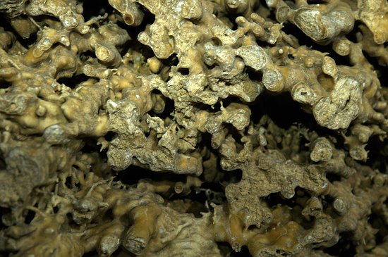 Pale, Italien: Radici cristallizzate