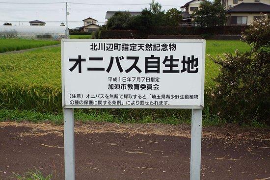 Kazo, Giappone: オニバス自生地の看板。