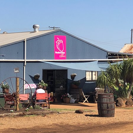 Bundaberg, Austrália: If you like strawberries & ice cream you should visit here. The ice creams are fantastic, very l
