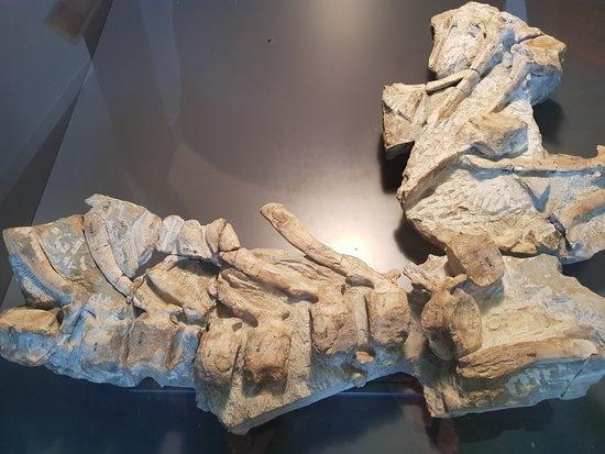 Dinosaurios de Arén