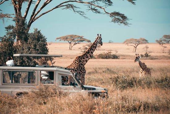 Hola Africa