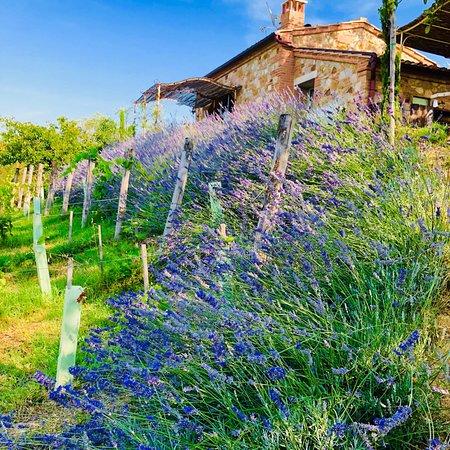 Petroio, Italy: photo7.jpg