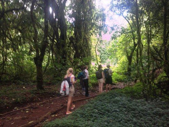 Hiking on Kilimanjaro with blessed Tanzania travel